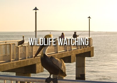 experience the wildlife in north central florida